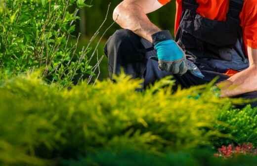 Gartenarbeit - Pergola