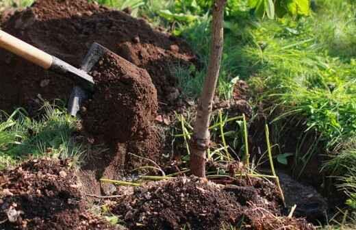 Baumpflanzung - Mit Rasen Bedecken