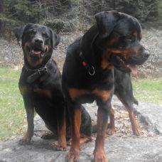 Hundeferienplätzli - Fixando Schweiz
