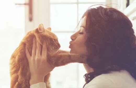Katzensitter - Babysitting