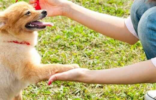 Adiestramiento de perros - Régimen interno y entrenos