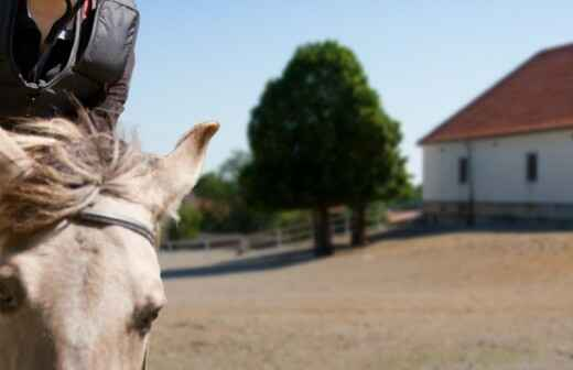 Montar ponis - Zoológico