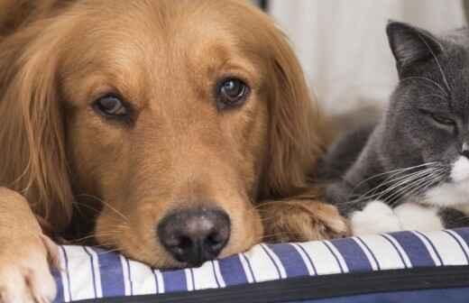 Fotografía de mascotas - Multifamiliar