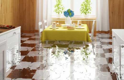 Reinigung und Instandsetzung nach einem Wasserschaden - Algen