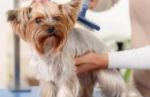 Haustierpflege - Aufpassen