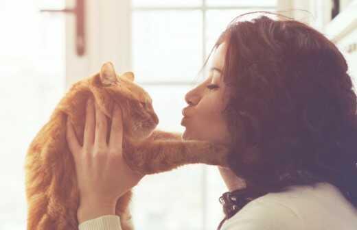 Katzensitter - Aufpassen