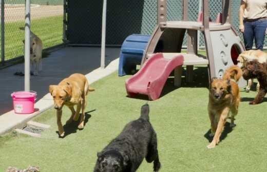 Hundetagesstätte (Hundesitter) - Babysitter