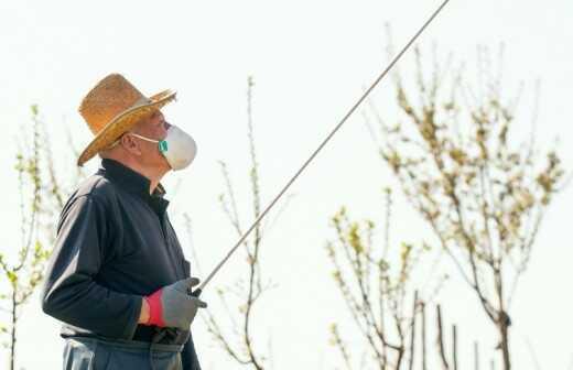 Pestizidanwendung im Außenbereich - Silberfisch