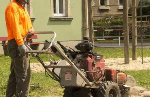 Baumstumpf oder -wurzel wegfräsen und entfernen - Hacken