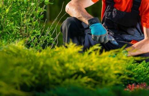 Gartenarbeit - Nachsaat