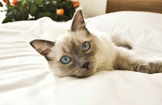 Hospedaje de gatos - Hospedaje