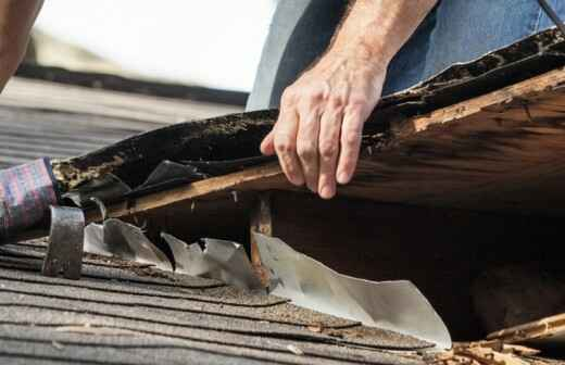 Inspección y eliminación de moho