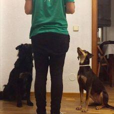 Utopía Educación Canina - Fixando España