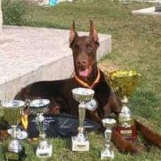 Escuela canina Esga - Fixando España