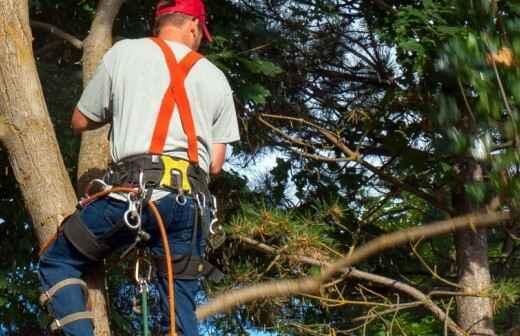 Poda y mantenimiento de árboles - Planta