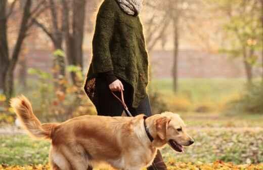 Paseador de perros - Hacia