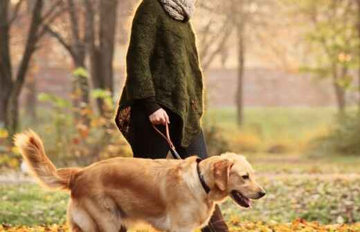 Paseador de perros - Bóxer