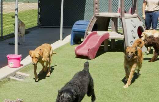 Hospedaje de perros - Dominante