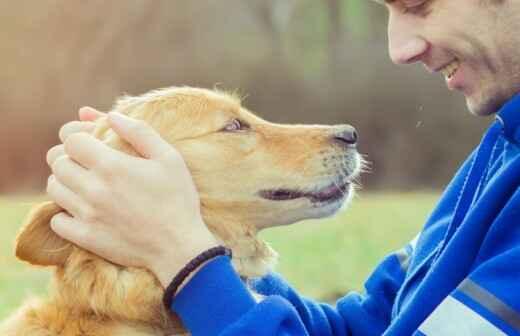 Cuidar tus mascotas - Comandos