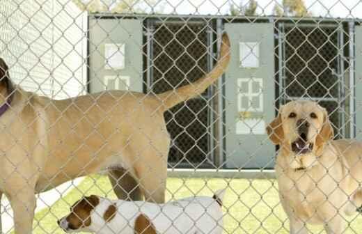 Hospedaje de mascotas - Comandos
