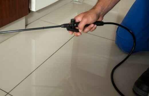 Pest Control Services - Brow