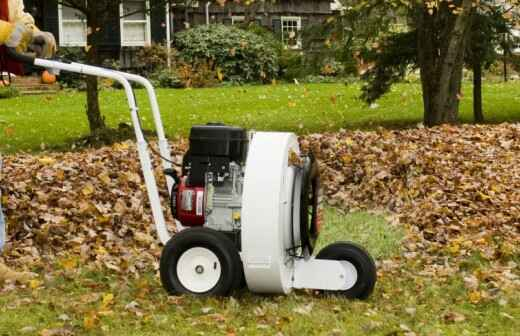 Leaf Clean Up (One Time) - Surgeons