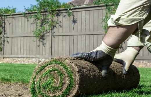 Sod Installation - Seeds