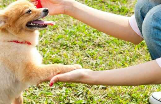 Dog Training - Private Lessons - Sitting