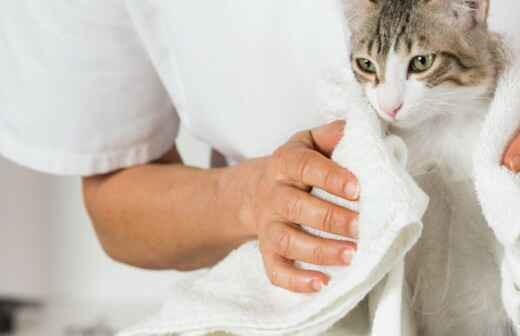 Cat Grooming - Sitting