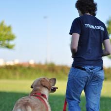 Tudo Sobre Patas - Treino de Cães - Aulas Privadas - Ramalde