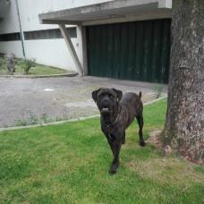 Centro de Treino Canino RM - Treino de Cães - Aulas Privadas - Ramalde