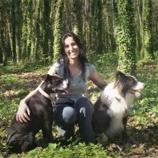 Its All About Dogs - Pet Sitting e Pet Walking - Aveiro