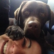 Marta Perestrelo Pinto - Cuidados para Animais de Estimação - Porto