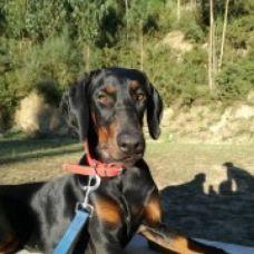 Anabela Alves - Treino de Cães - Porto