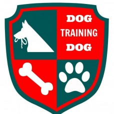 Dog Training Dog - Pet Sitting e Pet Walking - Lisboa