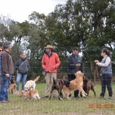 Escolas de Treino de Cães Eng.º Miguel Godinho - Treino de Cães - Setúbal