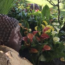 PGS' Garden Center - Jardinagem e Relvados - Faro