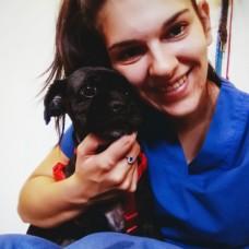 Beatriz Rodrigues - Cuidados para Animais de Estimação - Viseu