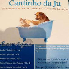 Joana - Pet Sitting e Pet Walking - Aveiro