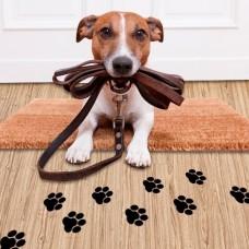 Dá Trela - Cuidados para Animais de Estimação - Leiria