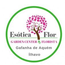 Esótica Flor Garden Center e Florista - Floristas - Aveiro