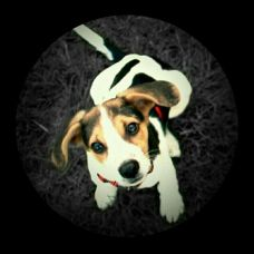 Em nome do cão - Treino de Cães - Leiria
