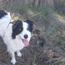 Inês Maroco - Treino de Cães - Castelo Branco