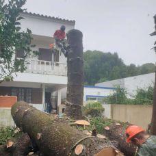 Arborista - Jardinagem e Relvados - Setúbal