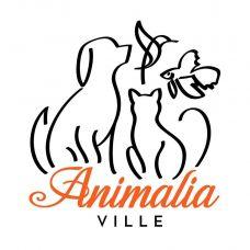 Animalia Ville Pet Shop -Banhos e Tosquias - Banhos e Tosquias para Animais - S??o Pedro Fins