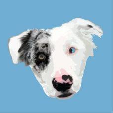 Kobi Dog Training - Treino de Cães - Aulas Privadas - Camarate, Unhos e Apelação