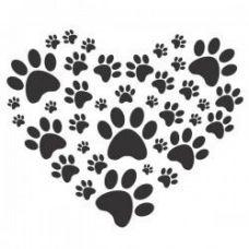 SosPets - Treino de Cães - Aulas Privadas - Ramalde
