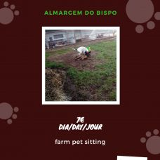 Pim Pam Pum Animação - Creche para Cães - Algueirão-Mem Martins