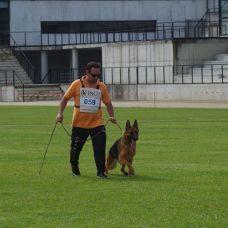 Tiago Baptista - Treino de Cães - Aulas Privadas - Braga (São Vicente)