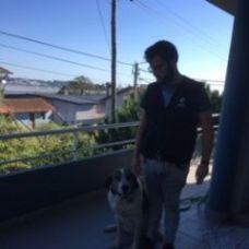Gonçalo Amorim - Treino de Cães - Aveiro